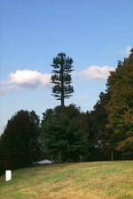 Cell_tower_tree_2